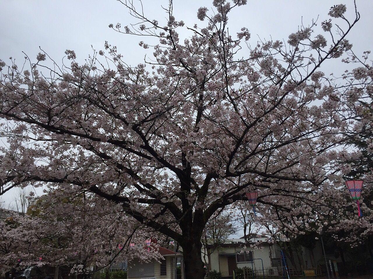 桜が見事な公園 江戸川区立 東小松川公園